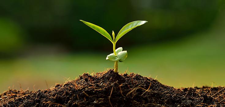 broto | Compre os Melhores Fertilizantes Orgânicos do Mercado Ecomark